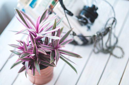 Netradiční pokojové rostliny, do nichž se zamilujete na první pohled