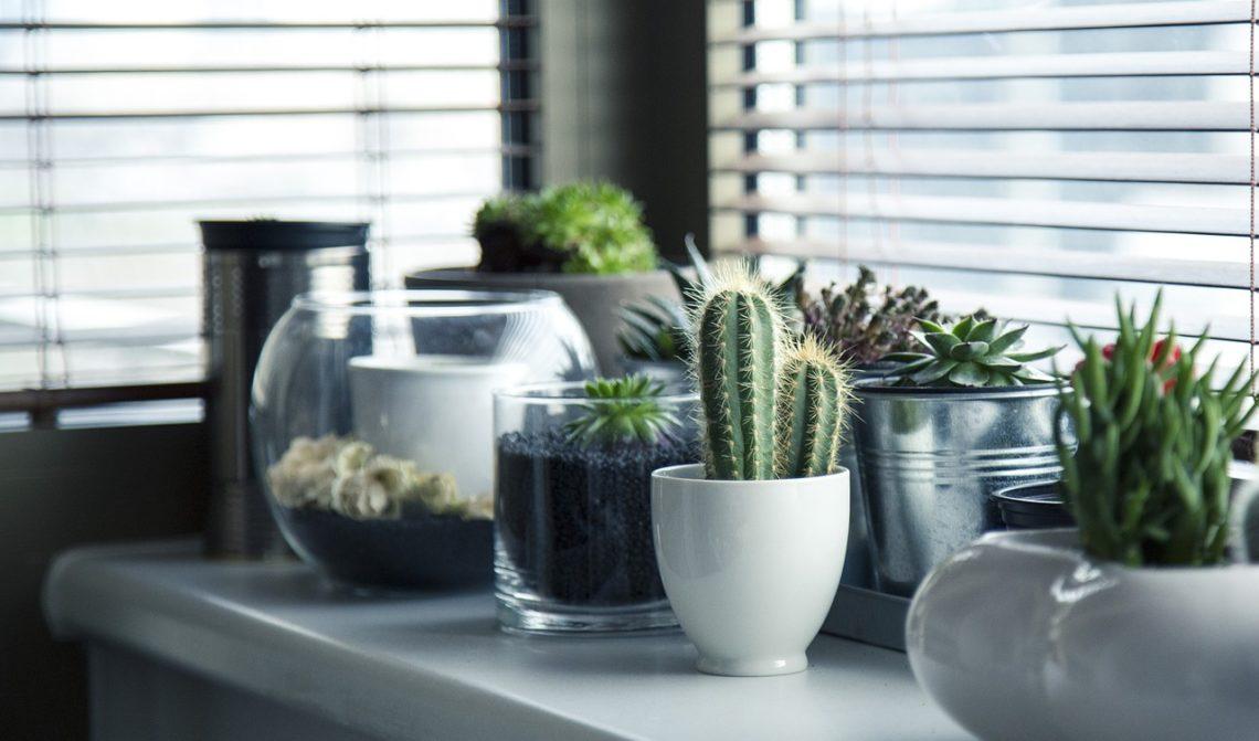 Pěstujeme kaktusy: Omyly, které komplikují bezproblémový růst