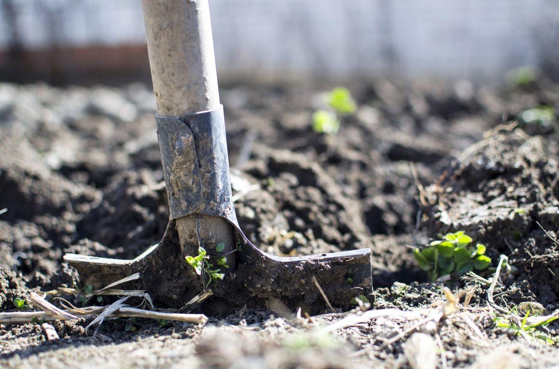 Zahrada v zimě: Co zahrada během tohoto období vyžaduje?